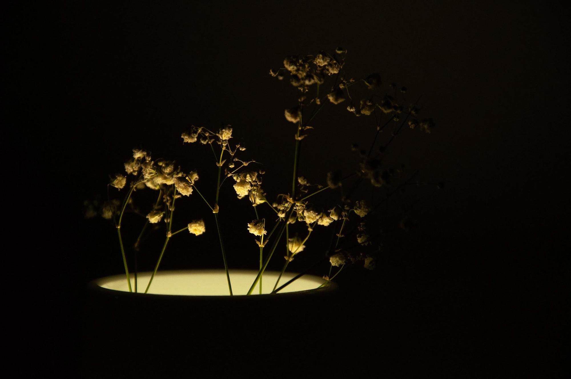 Ray Vase 5